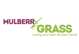 Mulberry Grass